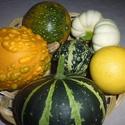 Dísztök csomag-őszi dekorációnak- AKCIÓ okt.15-ig!