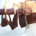 Csokis almaszirom, Kulinária (Ízporta), Édességek, Szárított, aszalt gyümölcs, Robogósra aszalt almaszirmok étcsokoládéba mártva. , Ízporta