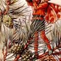 fenyőrügy szörp, Kulinária (Ízporta), Lekvár, Szörp, friss fenyőrügyekből készült szörp, citrom és cukor hozzáadásával. Túl azon, hogy egyedi ..., Ízporta