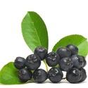 Fekete berkenye lekvár - 370 ml, • A fekete berkenye pektinjei méregtelenítő h...