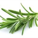 Rozmaring ecet - 200 ml, Olaj, zsír, ecet, Kistermelői, kézműves  ecet. Pikánsa ecet, salátára, főzelékekbe.   • Serkentő, keringés..., Ízporta