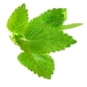 Citromfű ecet - 200 ml, A saját termesztésű citromfűből készítettü...